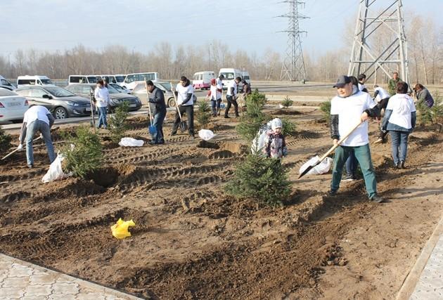 ForteBank приступил к высадке 500 деревьев в Павлодаре